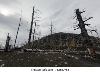 Kamchatka Peninsula volcanic landscape: bare burnt trees (larch) on volcanic slag, ash in Dead Wood (Dead Forest) - consequence of natural disaster catastrophic eruptions Plosky Flat Tolbachik Volcano