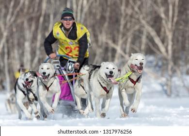 KAMCHATKA, RUSSIA - FEB 25, 2017: Kamchatka Sled Dog Race Beringiya, Russian Cup of Dog Sled Racing (snow disciplines). Running husky sled dog team musher Levkovsky Valentin on background volcano.
