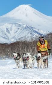KAMCHATKA, RUSSIA - FEB 25, 2017: Kamchatka Sled Dog Race Beringiya, Russian Cup of Dog Sled Racing (snow disciplines). Running husky sled dog team musher Sokolov Valery on background volcano.
