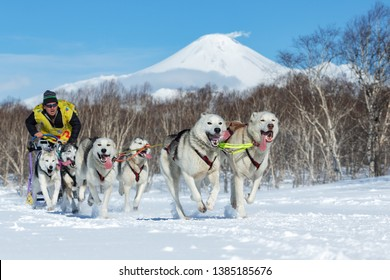 KAMCHATKA, RUSSIA - FEB 25, 2017: Russian Cup of Dog Sled Racing (snow disciplines), Kamchatka Sled Dog Race Beringiya. Running husky sled dog team musher Levkovsky Valentin on background volcano.