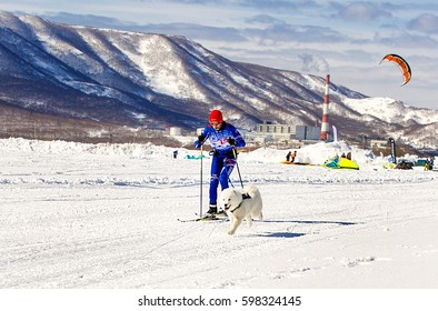 "Kamchatka, Russia - March 11, 2017:  Winter sports festival ""Snowy Way"" in Kamchatka. Skijoring man skiing runs with dog  in harness."