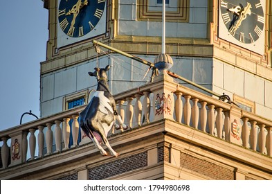 Kampen, The Netherlands, July 30, 2020: plastic cow, traditionally suspended from the clock tower as a reference to a historical story