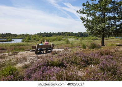 Kampina heath between Oisterwijk and Boxtel, province of Noord-Brabant, the Netherlands