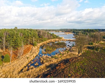 Kampina Nature Reserve in Boxtel, The Netherlands