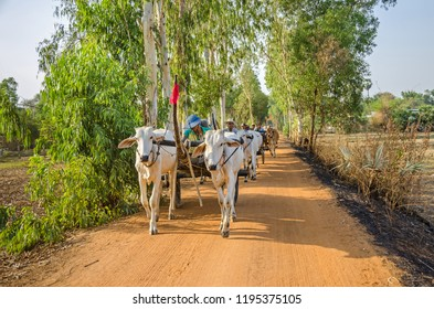Kampong Tralach, Cambodia - April 10, 2018: Cow carriage taxi for tourists near the the village Kampong Tralach Leu