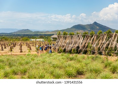 KAMPOT / CAMBODIA - FEBRUARY 18, 2019: Tourists with guide on the Kampot pepper farm La plantation