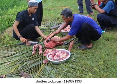 KAMPOT, Cambodia - October 10, 2013: Unidentified Malaysian Muslims help in halal slaughtering part of a cow during Eid Al-Adha Al Mubarak, the Feast of Sacrifice or Qurban.