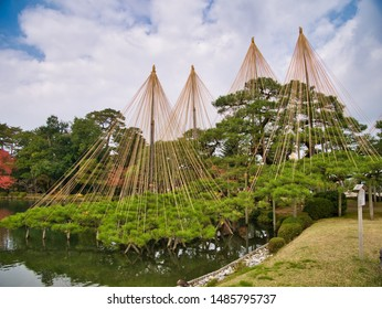 Kanazawa, Japan - November 11, 2018: Trees supported by yukizuri ropes, in Kenrokuen gardens, Kanazawa in the  Ishikawa Prefecture, Japan. Kenrokuen  is one of the three great gardens of Japan.