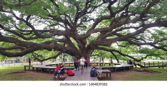 Kanchanaburi, Thailand- July 22, 2019:  Many tourism or People travel to visit and seeing Giant Monkey Pod tree at Kanchanaburi, Thailand. Landmark for travel in Asia.Old big tree and Beauty of Nature
