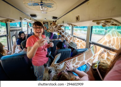 KANCHANABURI, THAILAND  - JUNE 13: Giraffe put head in bus to the excitement of tourists on 13 June 2015 in Safari Park Open Zoo. This is a popular tourist place with visitors from many countries.
