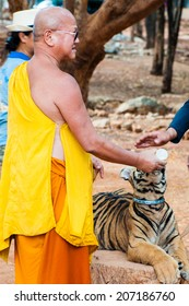 Kanchanaburi, Thailand - May 23, 2014: Buddhist monk feeding with milk a Bengal tiger at the Tiger Temple in Thailand.The Temple was founded in 1994 as a temple and sanctuary for wild animals.