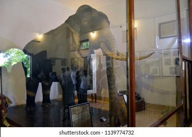 Kandy, Sri Lanka - April 6, 2018: The elephant Raja's stuffed remains in the enclosure of the palatial complex of Sri Dalada Maligawa, the Temple of the Sacred Tooth.