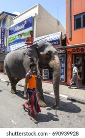 KANDY, SRI LANKA - AUGUST 01, 2017 : A mahout leads an elephant through the streets of Kandy. The elephant is in Kandy to parade in the Buddhist Esala Perahera (great procession).