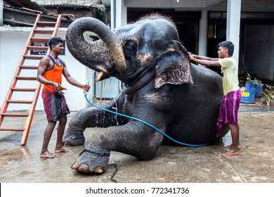 KANDY, SRI LANKA - AUGUST 01, 2017 : Mahouts wash an elephant within the Kataragama Temple in Kandy. The elephant is being prepared to parade in the Buddhist Esala Perahera (great procession).