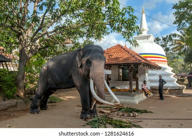 KANDY, SRI LANKA - AUGUST 10, 2016 : A ceremonial elephant tethered within the Temple of the Sacred Tooth Relic complex. It will parade in the Buddhist Esala Perahera (great procession).