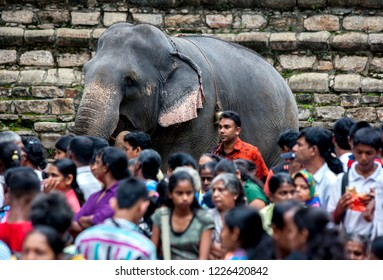 KANDY, SRI LANKA - AUGUST 11, 2013 : A ceremonial elephant stands amongst a crowd of hundreds of people outside the Temple of the Sacred Tooth Relic prior to the start of the Esala Perahera.