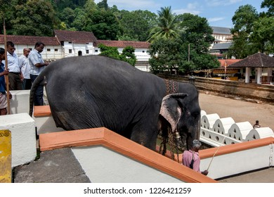 KANDY, SRI LANKA - AUGUST 11, 2013 : A ceremonial elephant walks down a stairway at the Temple of the Sacred Tooth Relic prior to the start of the Esala Perahera (great Procession).