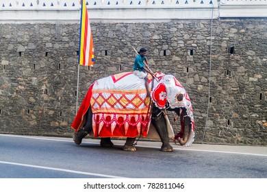 KANDY, SRI LANKA - JULY 19, 2016: Decorated elephant on a street of Kandy during Poya (Full Moon) holiday.