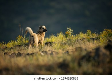Kangal. The wild nature of Bulgaria.