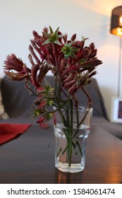 Kangaroo Paw Flower in Glass Cup Vase Table Home Setting