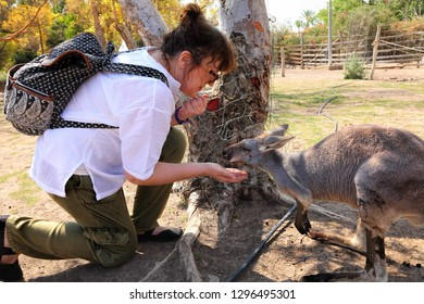 Kangaroo and woman are friends. Woman is feeding the kangaroos. Human hand give the food to kangaroo. Friendship and trust. Animals protection