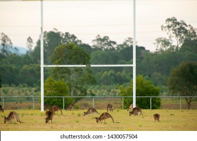 Kangaroos outdoors amongst nature during the daytime.
