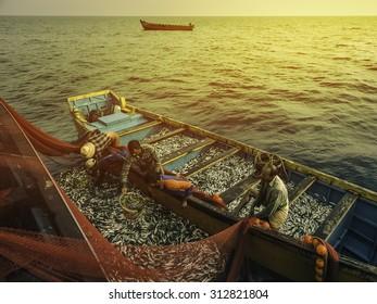 KANNUR, INDIA - DECEMBER 22, 2011: Fishermen haul in catch of sardine in the Arabian Sea off the Malabar Coast at sunset on December 22, 2011 near Kannur, Kerala, India.