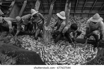 KANNUR, INDIA - DECEMBER 22, 2011: Fishermen in Arabian Sea transfer catch of sardine to delivery boats to convey to market on December 22, 2011 near Kannur, Kerala, India.