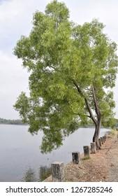 Kannur, Kerala, India: December 16, 2018 - Kavvayi backwaters.