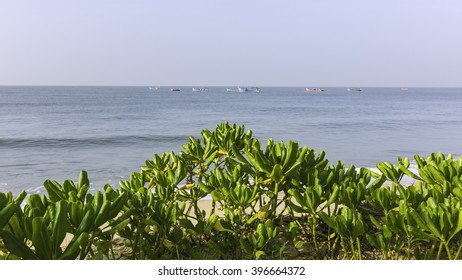 Kannur, Kerala, India. View from Thottada beach on bright, sunny day in summer with green plants and traditional fishing boats out in the Arabian Sea at Thottada beach, Kannur, Kerala, India.