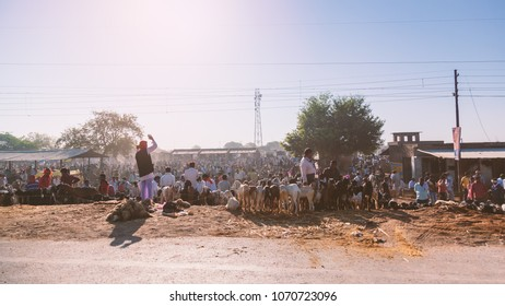 Kanpur, Uttar Pradesh / India - March 06 2018: Local Cattle Market of Cows, sheep, goats in village.