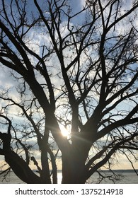 Kansas lake sunset as seen through the silhouette of an old tree. 2018. Unedited.