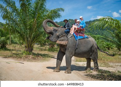 KAO LAK, THAILAND - 24 FEB 2017: Tourists are riding an elephant in tropical green fields with palms trees in Thailand
