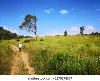 Kao Yai Thailand on December 18, 2018: a woman was walking in the middle of grass field area