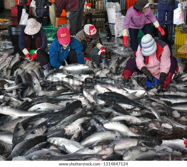 KAOHSIUNG, TAIWAN -- JANUARY 13, 2019: Workers at the Sinda fish market extract the roe from grey mullet fish. The roe will be dried, pressed and salted.