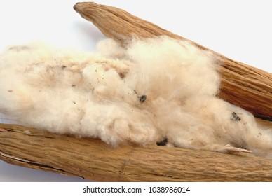 kapok fiber on white background