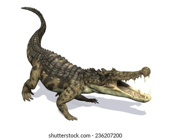 The Kaprosuchus (Greek for 'Boar Crocodile') was a prehistoric crocodile that lived during the Cretaceous Period.