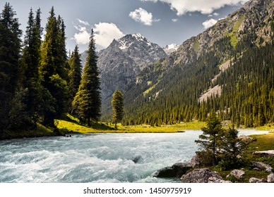 Karakol river in the mountain valley with big pine trees and snowy peak in Karakol national park, Kyrgyzstan