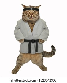 The karate cat in a white kimono with a black belt and headband gets ready to fight. Isolated.