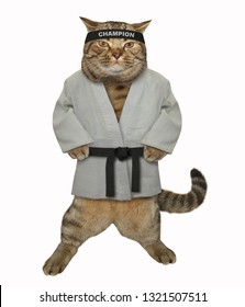 The karate fighter cat in a white kimono with a black belt and headband gets ready to fight. Isolated.