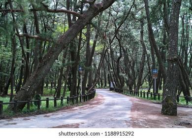 Karatsu city nijinomatsubara pine forest road, saga prefecture, Japan