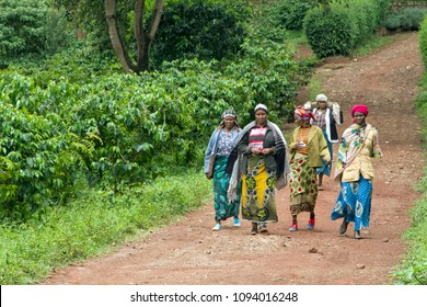 Karatu - Tanzania / March 2016: group of women working in coffee plantation back from the field for the lunch break.