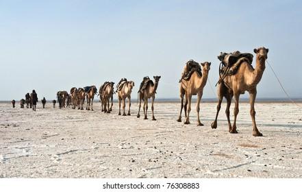 Karawane in der Danakil
