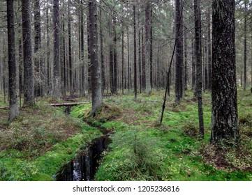 Karelia mossy river stream forest trees background. Forest river stream in forest moss scene. Moss forest river stream flow. Forest trees wilderness river stream view