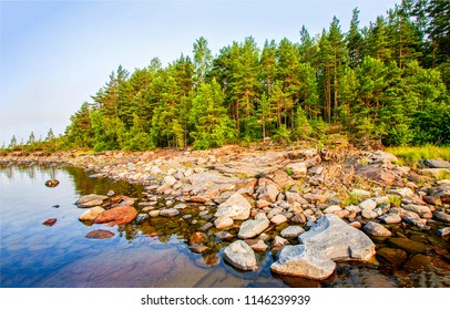 Karelia pine tree forest lake beach landscape. Pine forest lake boulders beach view. Pine tree forest lake boulders beach scene