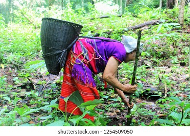 Karen  tribe in the middle of the forest.  Karen life on the mountain. Mae Hong Son, Thailand.