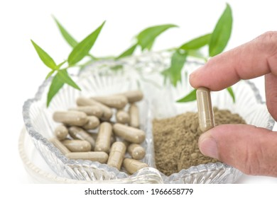 Kariyat or andrographis paniculata powder in capsules and banch green leaves isolated on white background.