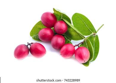 Karonda Fruit  isolated on white background