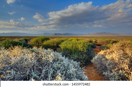 KAROO LANDSCAPES The Karoo is an ancient basin which was once a shallow inland sea. Its geology is rich in fossils dating back to 270 million years ago, is an arid region  prone to extended drought