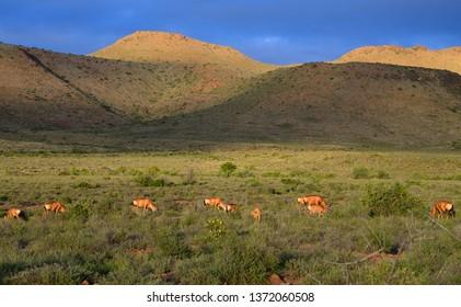 Karoo National Park, Great Karoo, South Africa